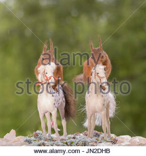 two red squirrels sitting on horses - Stock Photo