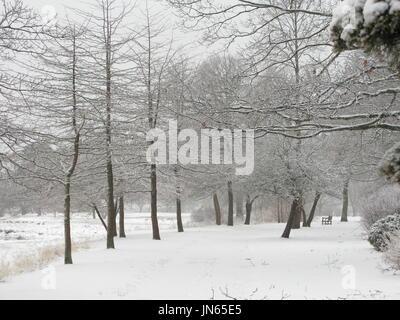 Masconomo Park in winter - Stock Photo