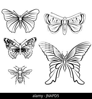 Butterfly set. Insect doodle sketch collection. - Stock Photo