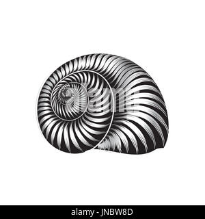 Seashell ingraved vector illustration isolated on white background. - Stock Photo