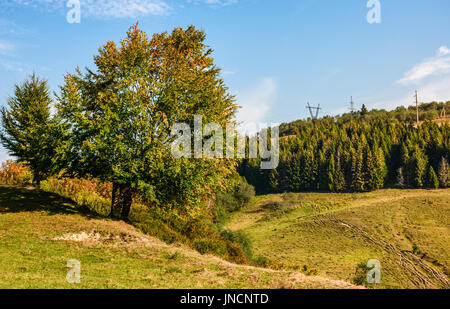 tree on a mountain grassy hill side meadow on a clear autumn sunny day with blue sky. powerlines along the hillside - Stock Photo