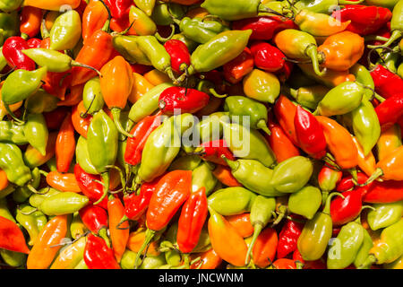 Many habanero chili peppers at the market in Martinique - Stock Photo