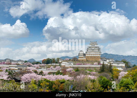 Cherry blossom flowers season with Himeji castle in Himeji city, Hyogo near Osaka, Japan - Stock Photo