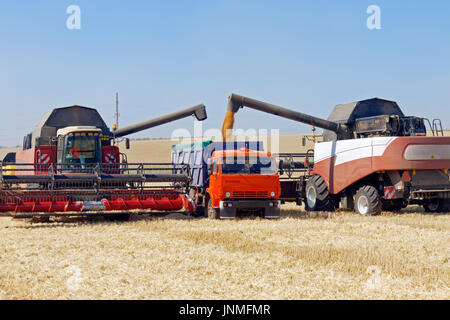 Combine harvester load wheat in the truck at the time of harvest in a sunny summer day - Stock Photo