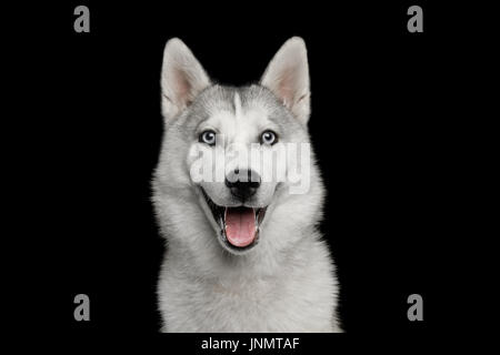 Husky Puppy Isolated on Black Background - Stock Photo
