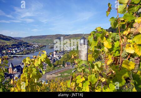 Reife Weintrauben am Weinstock, Blick auf Zell und runder Turm, oberster Turm der ehemeligen Stadtbefestigung und - Stock Photo