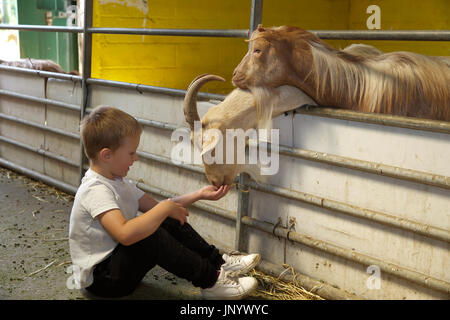 Sheffield, UK. 31st July, 2017. Children enjoy visiting the animals in Graves Park Sheffield during the summer holidays. - Stock Photo