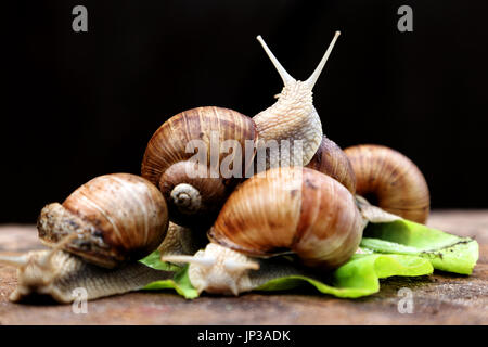 Snails in the garden on the wooden background. The snail stuck out its antennae - Stock Photo