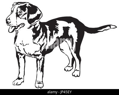 Decorative portrait of standing in profile Entlebucher Mountain Dog, vector isolated illustration in black color - Stock Photo