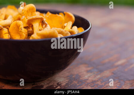 Mushroom Chanterelle. Fresh Raw Mushrooms Chanterelle In Bowl On Old Wooden Painted Table. Top View. Selectiv Focus. - Stock Photo