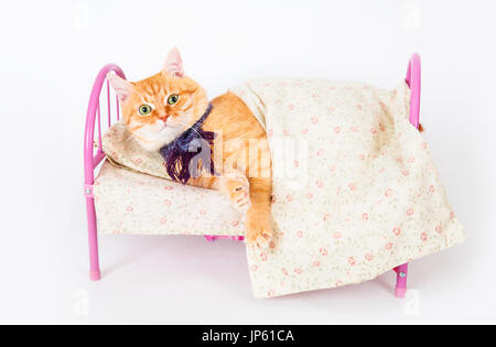 Red cat lying in a bed. The concept of veterinary and animal health. Studio shot. - Stock Photo
