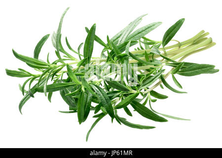 Bundle of Summer Savory (Satureja hortensis), fresh. Clipping path - Stock Photo