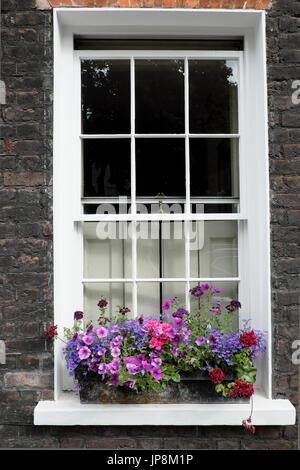 Window box filled with pelargoniums on Colebrooke Row in Islington London N1 England UK  KATHY DEWITT - Stock Photo