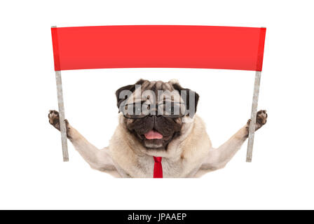 business pug dog with tie and reading glasses, holding up red banner sign, isolated on white background - Stock Photo