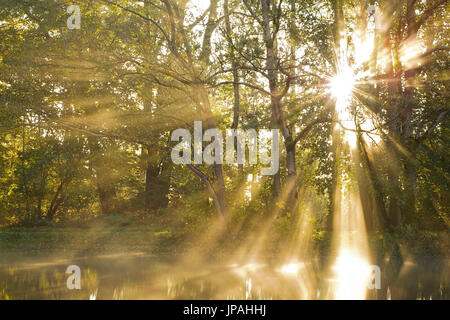 The sun breaks through the wood on the shore of a small pond, by early morning fog, the sunrays are displayed plastically. - Stock Photo