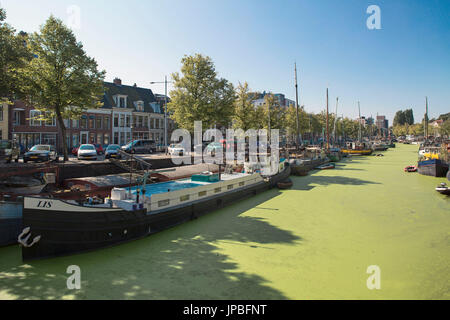 Green canal in Groningen, Netherlands - Stock Photo