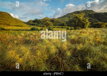 Vegetation on Gili Lawadarat, Komodo, island, UNESCO, world heritage - Stock Photo