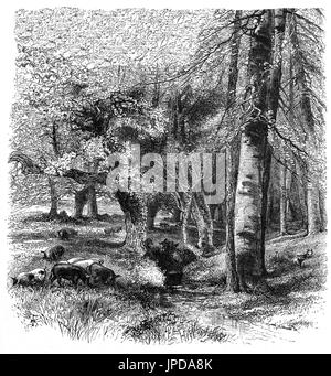1870: Pigs feeding in the New Forest near Lyndhurst  in Hampshire, England - Stock Photo