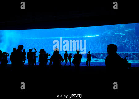 Aquarium of Genoa district, Liguria, Italy - Stock Photo