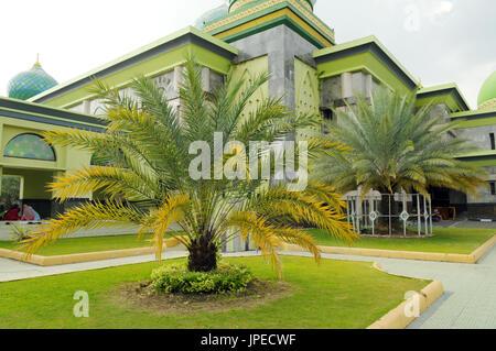 Kurma tree, date palm tree ( Phoenix dactylifera)  at masjid yard in Masjid Agung, Pekanbaru Riau, Indonesia - Stock Photo