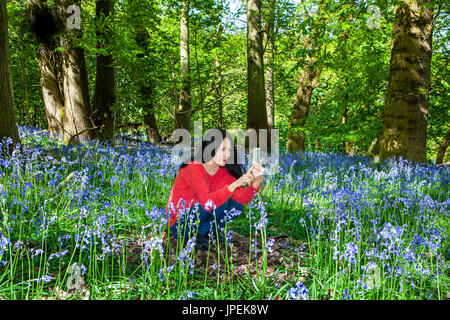 Woman in Bluebell Woodland taking photograph - Stock Photo