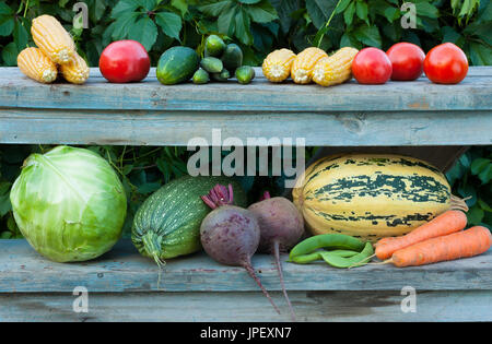 Close Up Fresh Organic Vegetables (Corn, Tomato, Cucumber, Cabbage, Vegetable Marrow, Beet, Peas, Carrot) On Old - Stock Photo