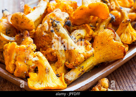 Chanterelle mushrooms freshly picked , edible yellow mushrooms - Stock Photo