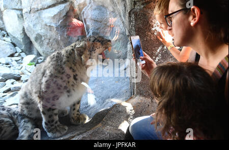 Leipzig, Germany. 1st Aug, 2017. The first visitors admire a snow leopard in the the newly opened Himalayan landscape - Stock Photo