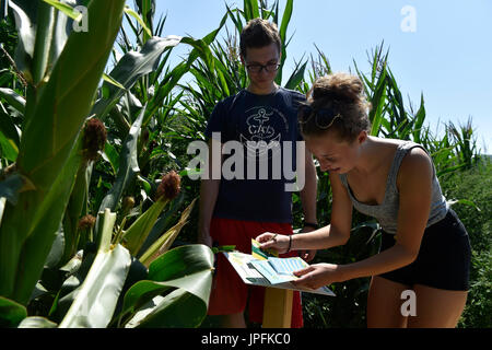 Brno, Czech Republic. 01st Aug, 2017. People walk through the maze cut in corn fields, new tourist attraction in - Stock Photo