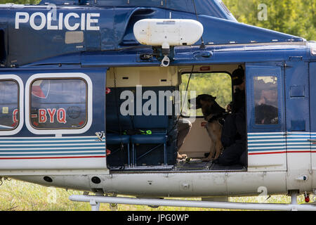 Czech police officers with a police dog in action during the training session of police dogs specializing in the - Stock Photo