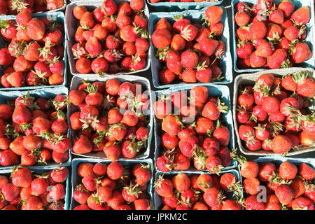 Monawk Valley, New York state - Fresh June strawberries for sale at a farmers market in Utica, New York State. - Stock Photo