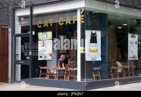 Cat Cafe in the Northern Quarter district of Manchester - Stock Photo