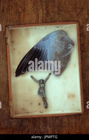 Wing of collared dove lying in shallow specimen box with figure of Jesus Christ removed from crucifix - Stock Photo