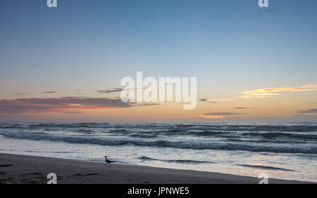 Seagull Walking on Beach with Sunset in the background - Stock Photo