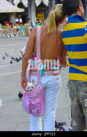 A young blonde woman and male companion stroll through piazza San Marco in Venice Italy as she carries a small Chihuahua - Stock Photo