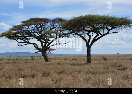 African Safari Landscape in Tanzania - Stock Photo