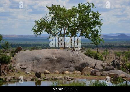 African Safari Landscape in Tanzania - Stock Photo