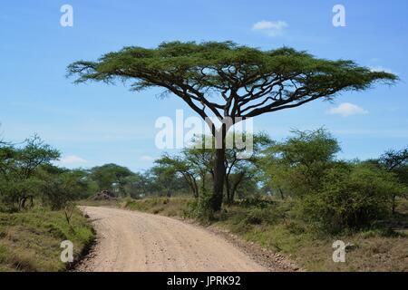 African Safari Landscape in Tanzania