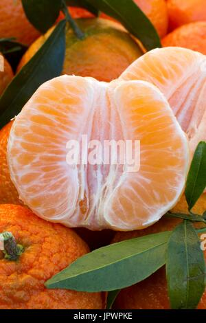 Clementines 'Oronules' - Stock Photo