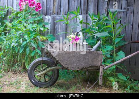 Old wooden wheelbarrow in a garden, hollyhocks and old wooden hut, countryside atmosphere, Dordogne, France. - Stock Photo