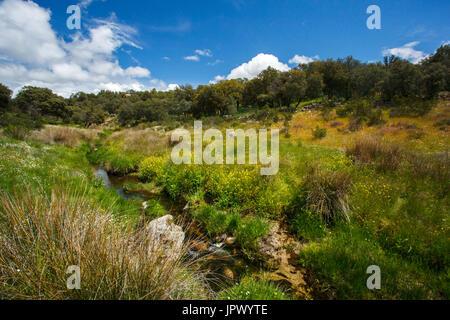 River in the scrubland - Cuenca Alta del Manzanares Spain - Stock Photo