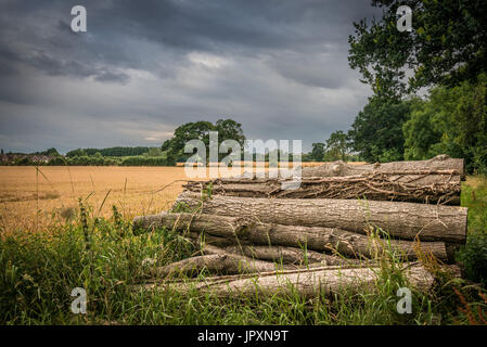 A stockpile of fallen logs stacked up on the edge of a woodland and field in the Lincolnshire Fens, near Bourne, - Stock Photo
