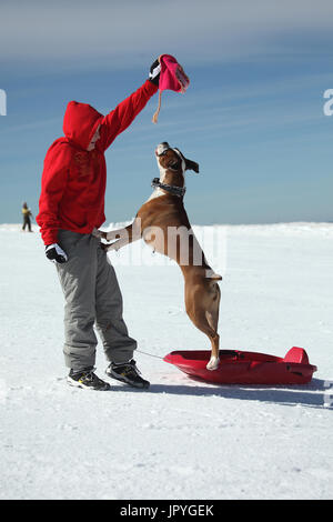 Bulldog with a child playing in the snow - France - Stock Photo