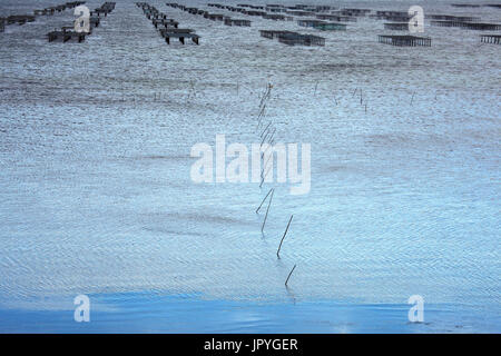Oyster beds - Etang de Thau France - Stock Photo