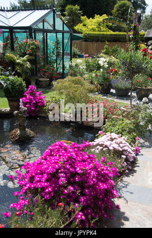 Potted Lampranthus around a pond and patio. - Stock Photo