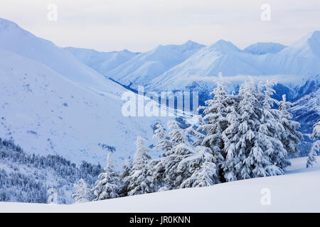 Snow Covered Mountain Range And Trees In Winter; Alaska, United States Of America - Stock Photo