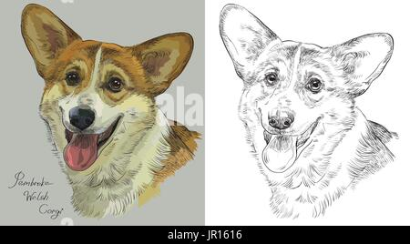 Colored Pembroke Welsh Corgi portrait on grey background and and black color on white background vector hand drawing - Stock Photo