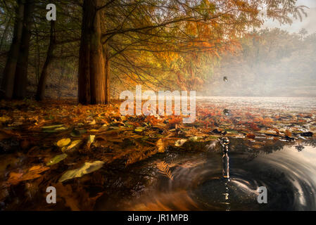Drops between the autumn colors, Parma, Italy - Stock Photo