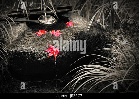 Japanese tsukubai washbasin in black and white with isolated color on red autumn maple leaves - Stock Photo