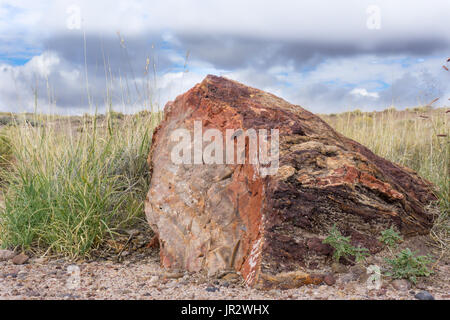 The trunk of a piece of Jurassic petrified wood in the Petrified Forest National Park, AZ. - Stock Photo